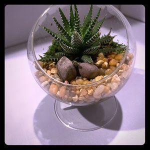 Glass globe pedestal with live succulent